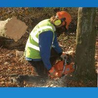 Arborists & Forestry